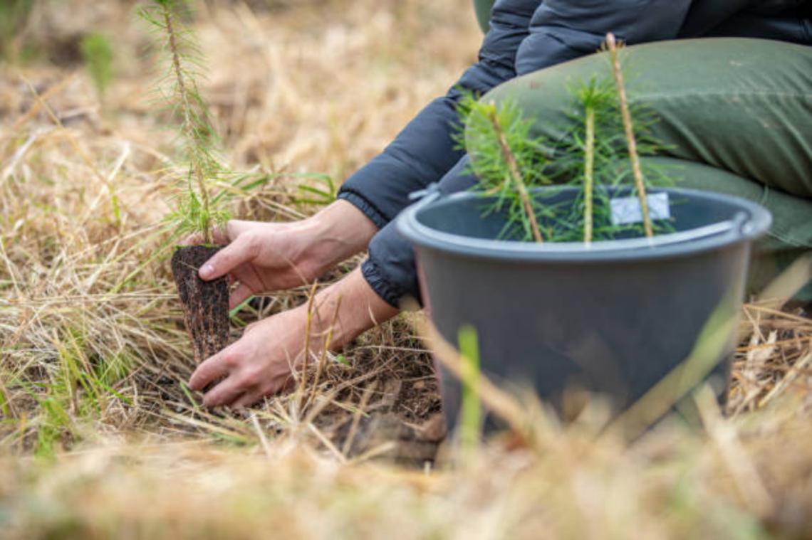 BK_Lighting_Planting_Tree