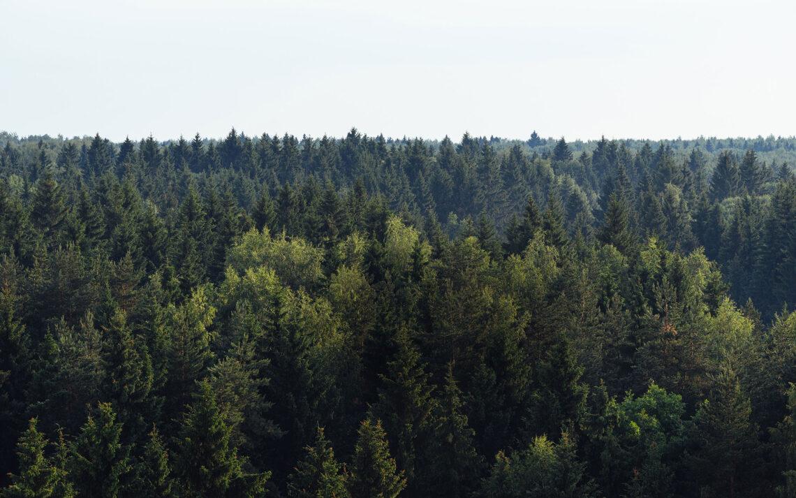 BK_Lighting_Forest